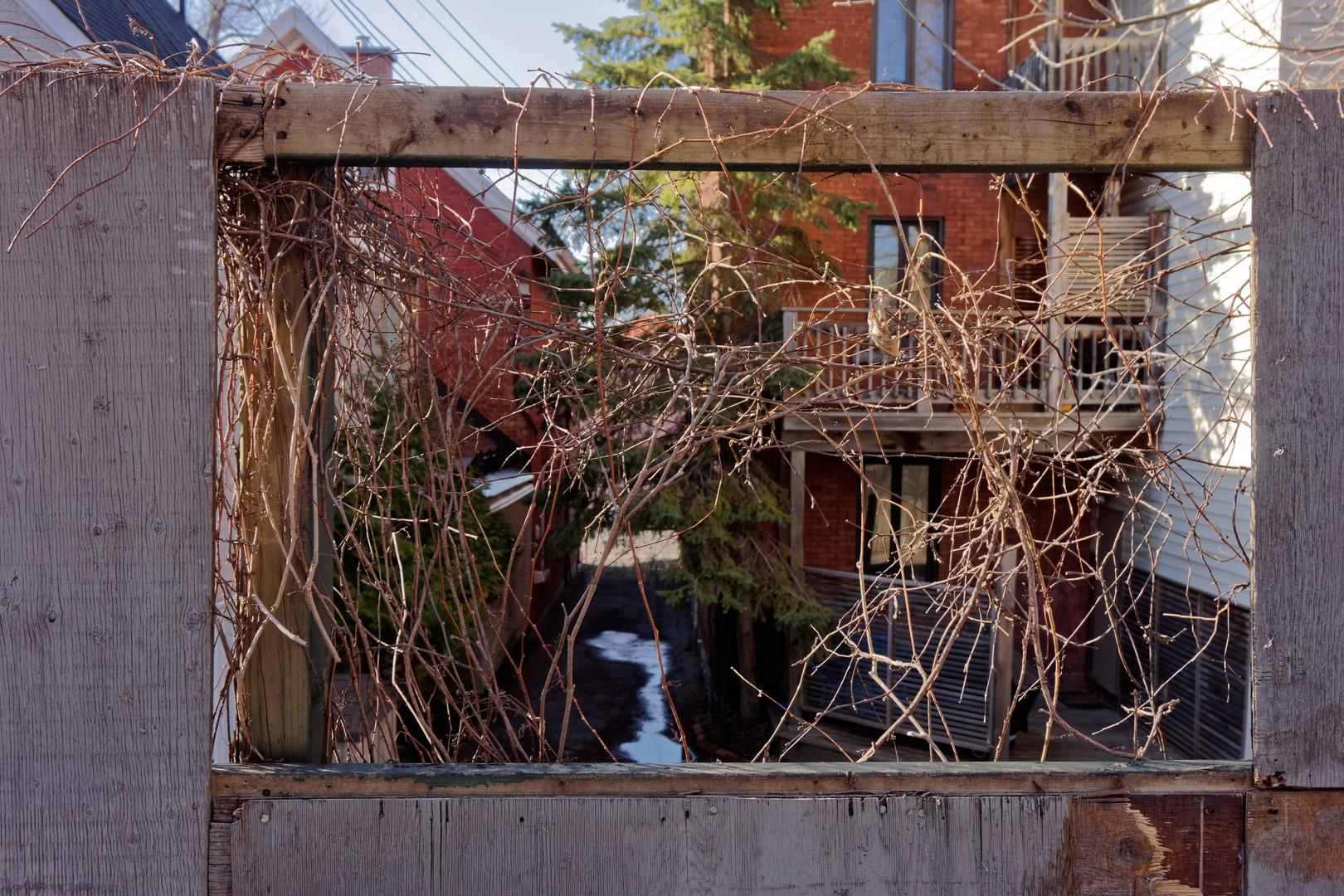 Ocy Window Iron Twig