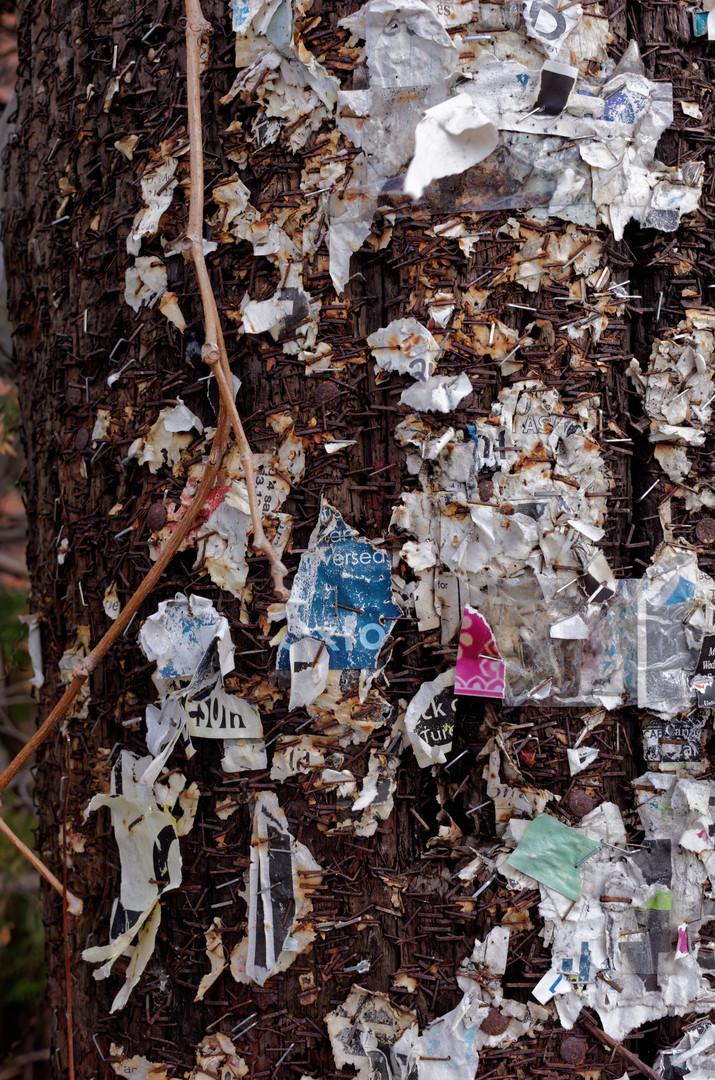 mass Leaf Tree Waste Plant
