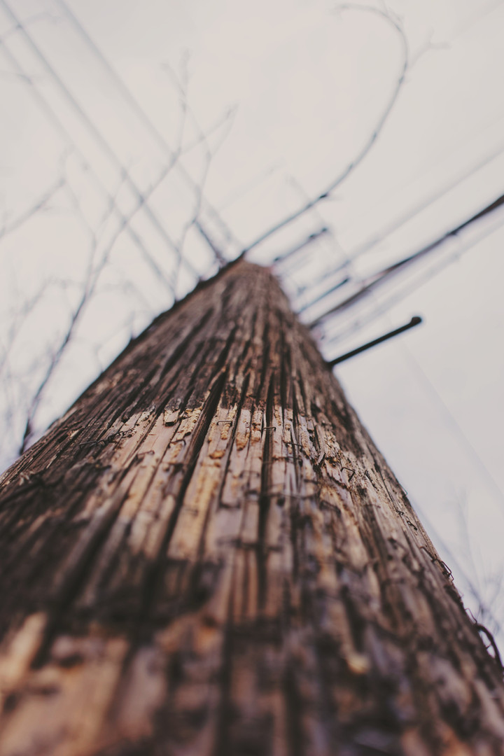 Wuntrous Wood Line Sky plant Wire