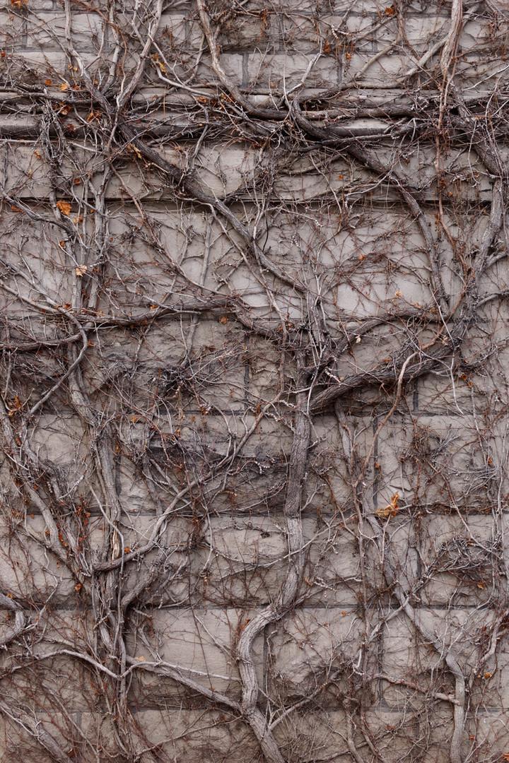 Twig Rust Vine