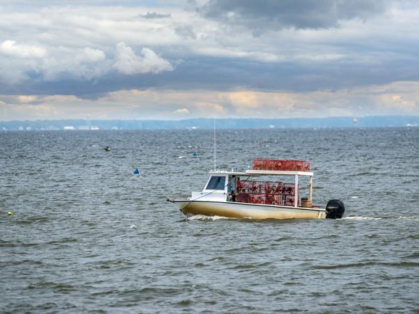 Waterman Crabbing in the Chesapeake Bay