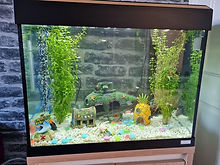 Notes on how to care for tropical fish
