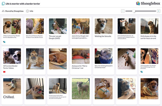 Border terrier 1.JPG