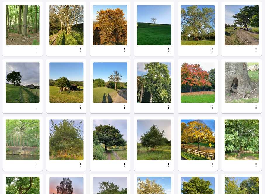 Tree of the day – A collection of photos