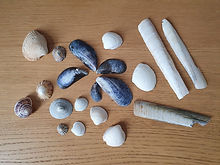 A digital collection of sea shells