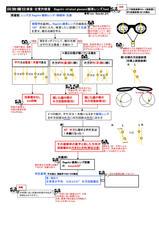 5-3バゴリニ線条レンズテスト