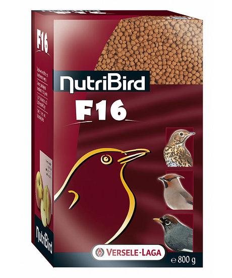 F16 - Maintenance food for fruit doves, trush- and jay-like birds