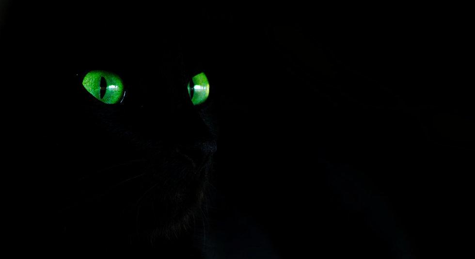 Black Cat Green eyes
