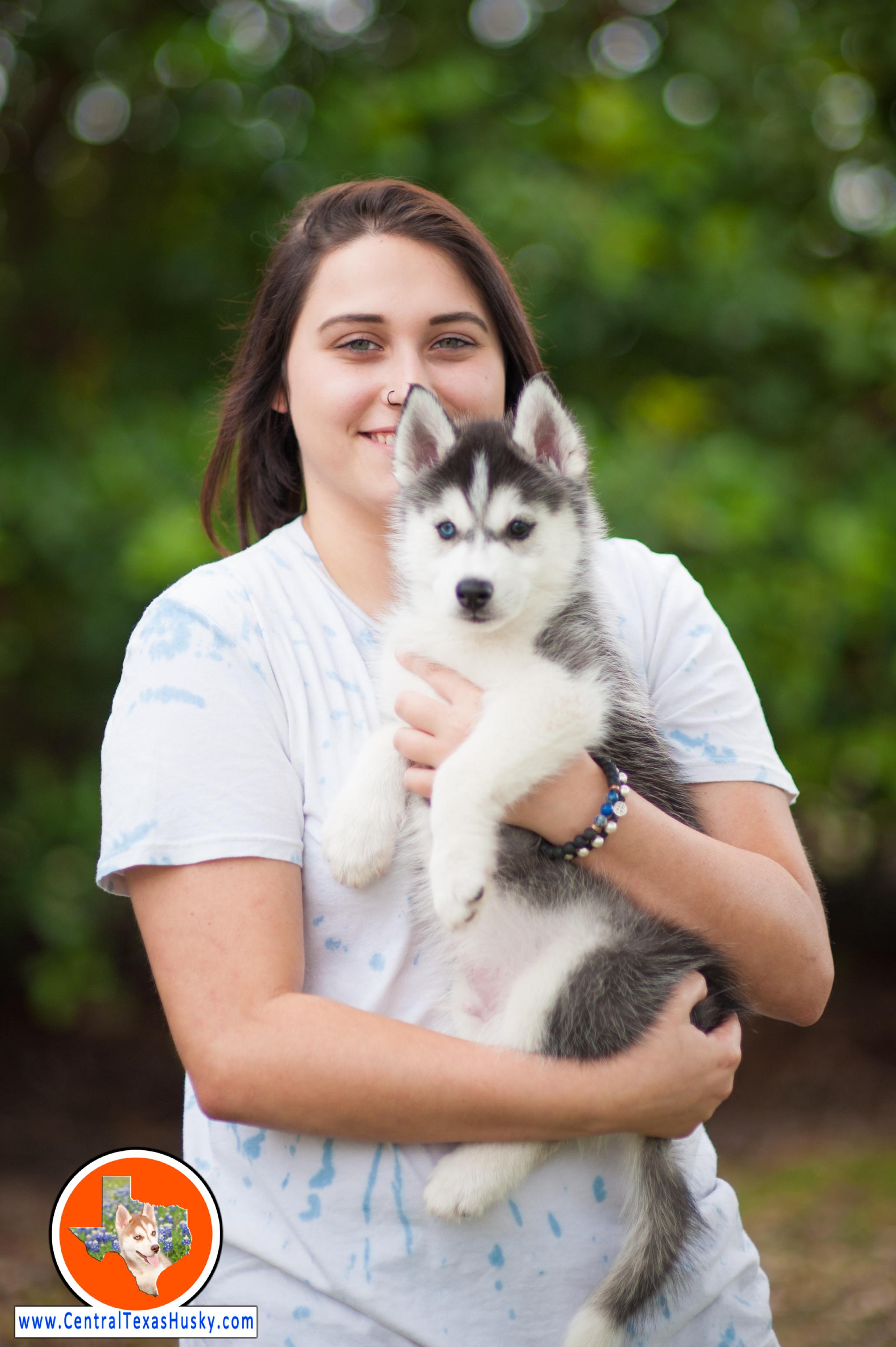 centraltexashusky_texas-husky-breeder_709116_20170521