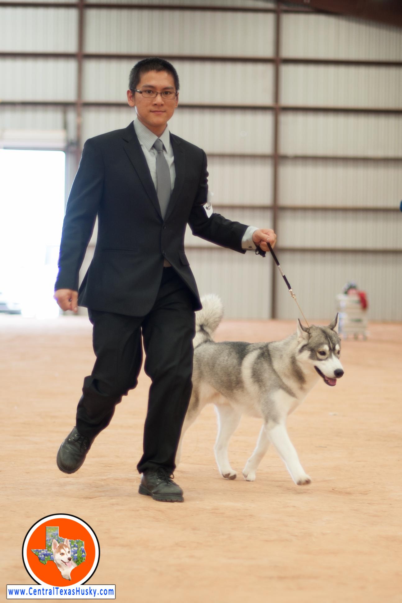 central-texas-husky_austin-siberian-husky-breeder_700805_20170923