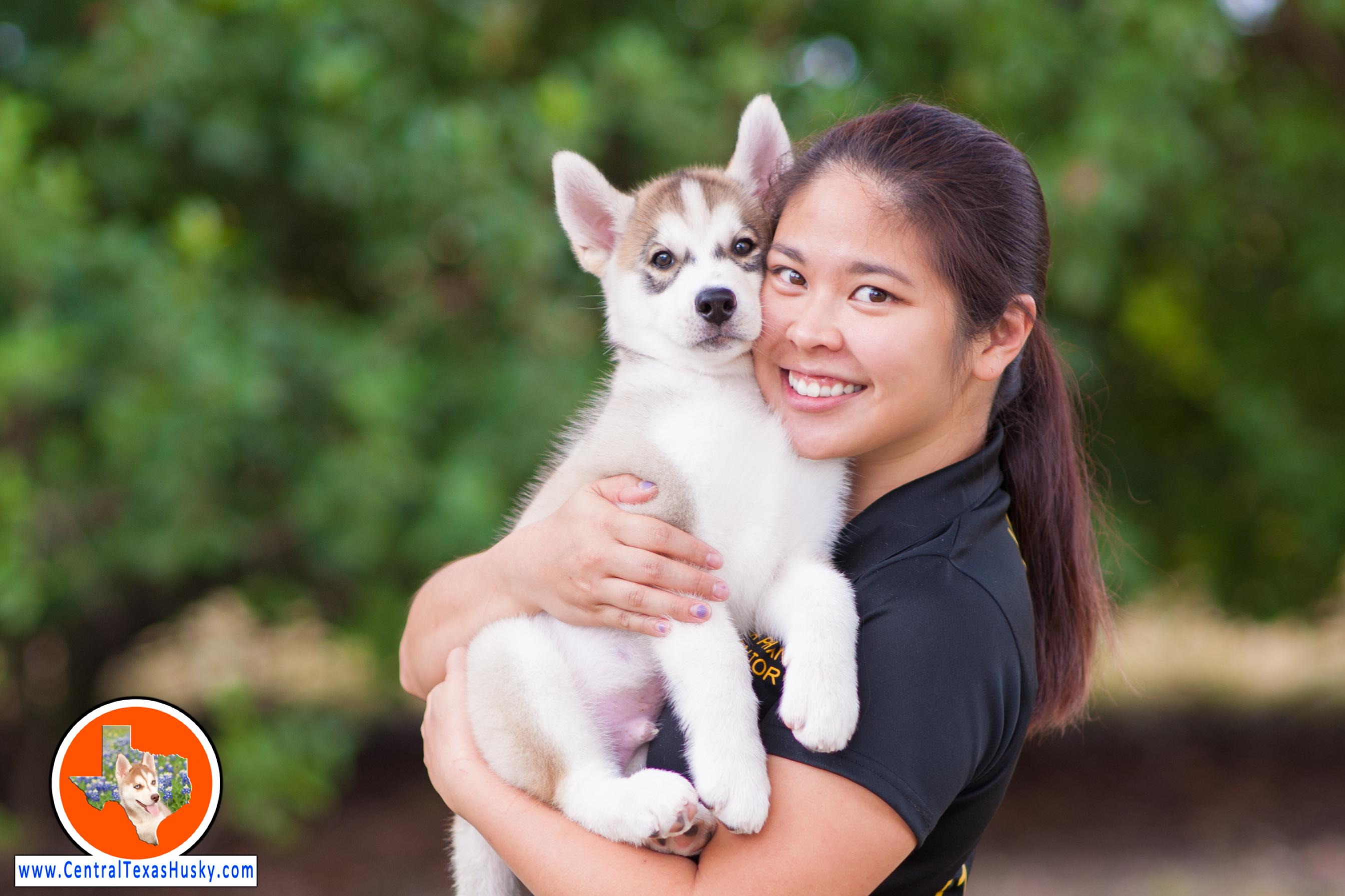 central-texas-husky_austin-siberian-husky-breeder_702583_20171104