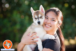 central-texas-husky_austin-siberian-husky-breeder_702605_20171104