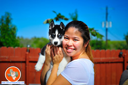 centraltexashusky_texas-husky-breeder_704726_20151004