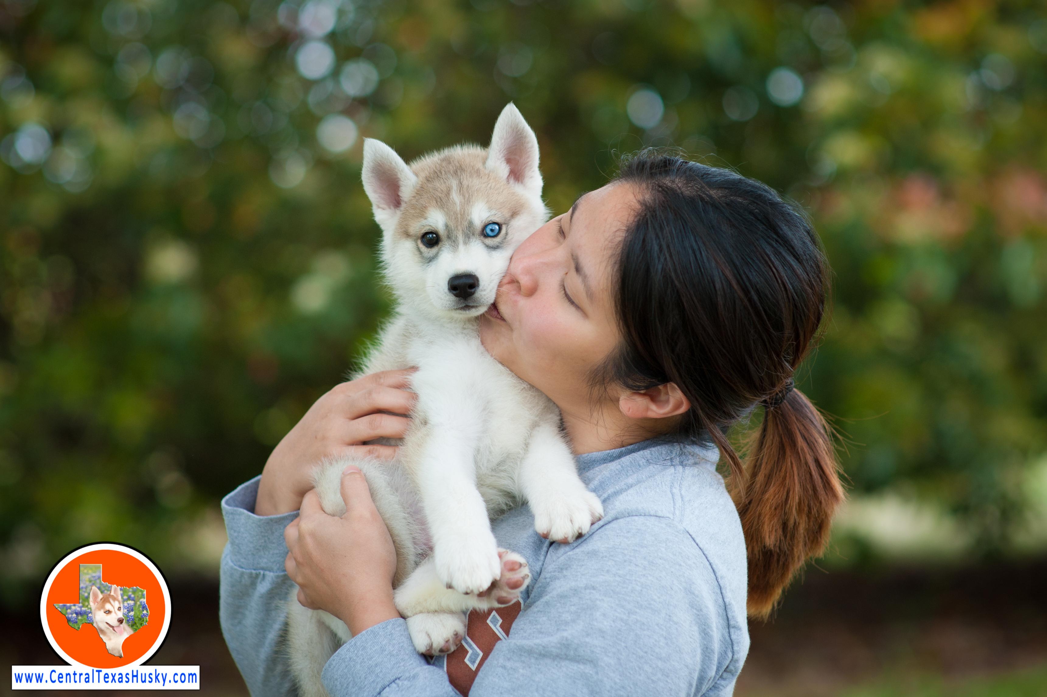 central-texas-husky_austin-siberian-husky-breeder_704419_20180408