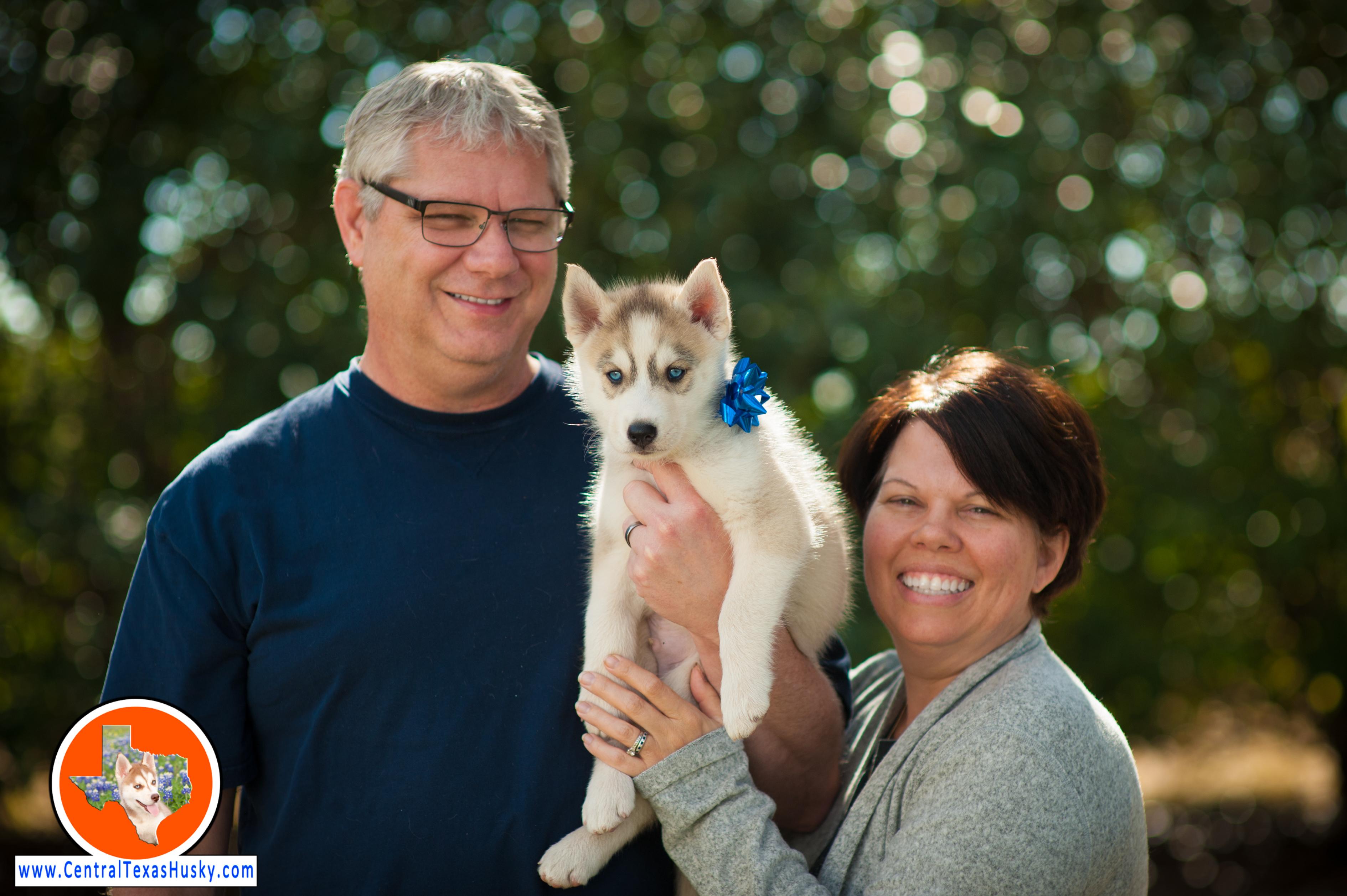 central-texas-husky_austin-siberian-husky-breeder_703152_20171202
