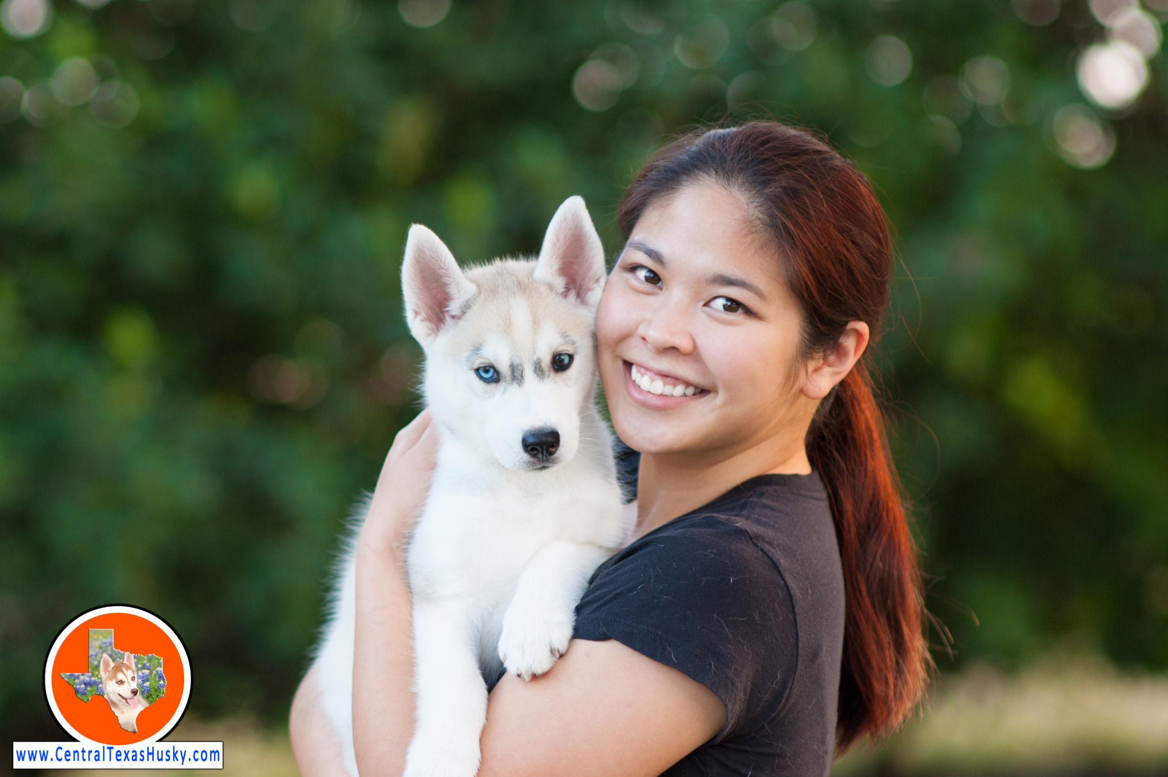 central-texas-husky_austin-siberian-husky-breeder_702632_20171104