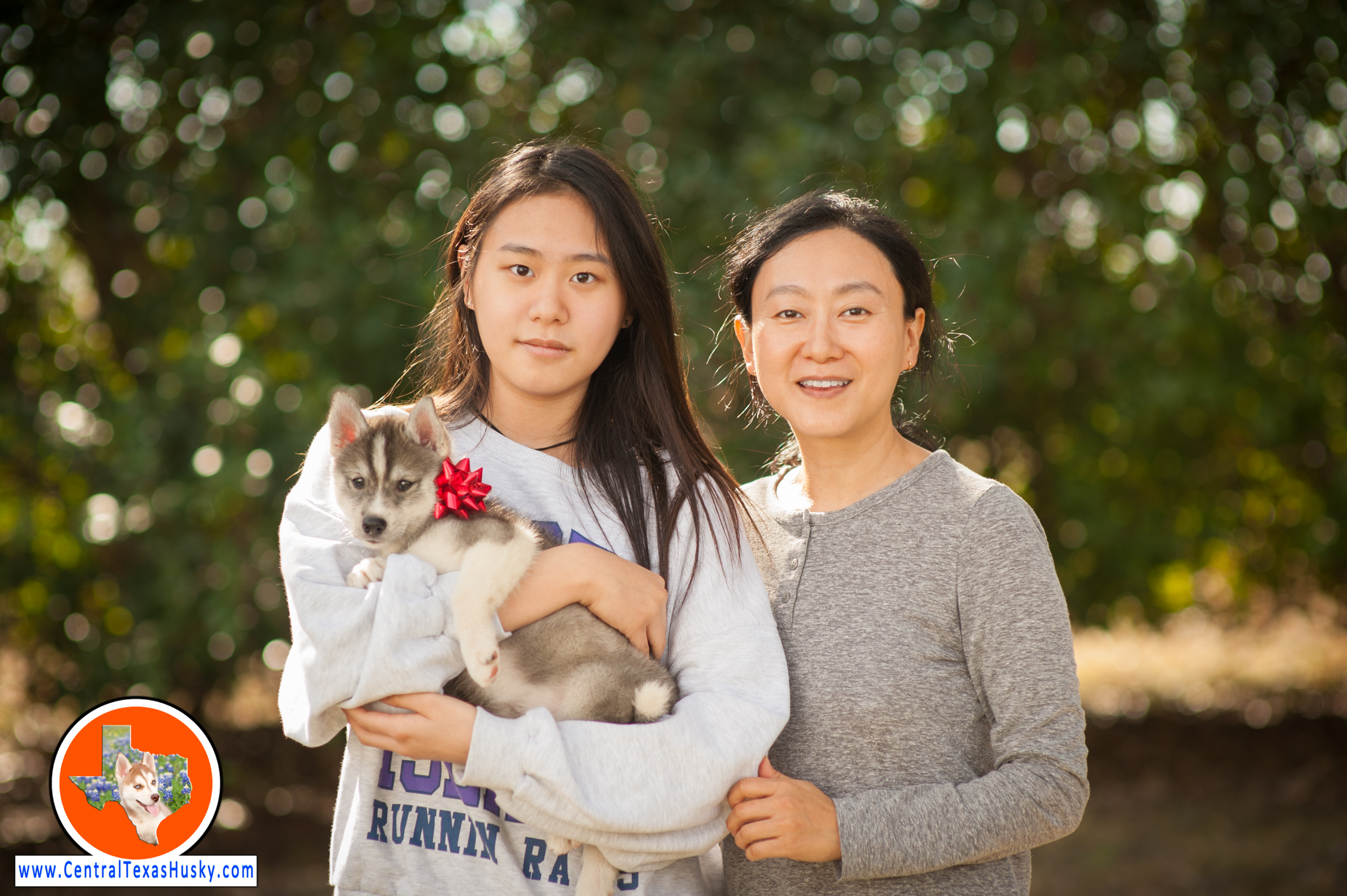 central-texas-husky_austin-siberian-husky-breeder_703139_20171202