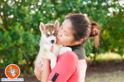 central-texas-husky_austin-siberian-husky-breeder_7739_20171021
