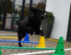 Revalidatie bij sporthonden