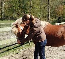 Dierfysiotherapie paard behandeling nek