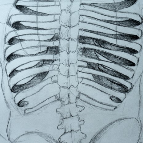 Detail: Rib Cage and Spine