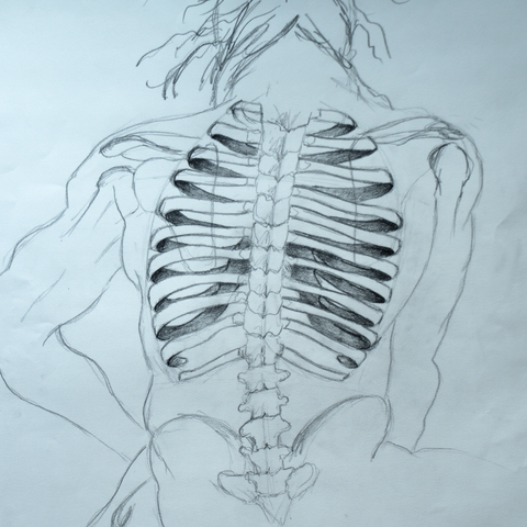 Rib Cage and Spine