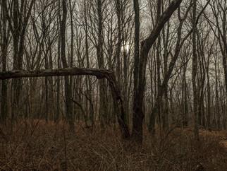 Nature Preserve Westchester.jpg