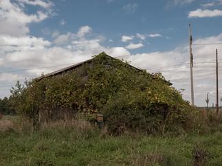 Barn Hidden by Growth Ithaca.jpg