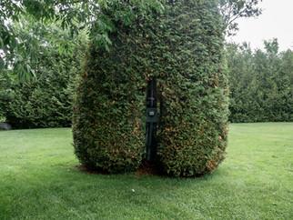 Big Bush with Meter Vermont.jpg