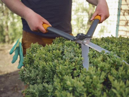On the Hedge - When to Trim, Cut, Back and Make Pretty
