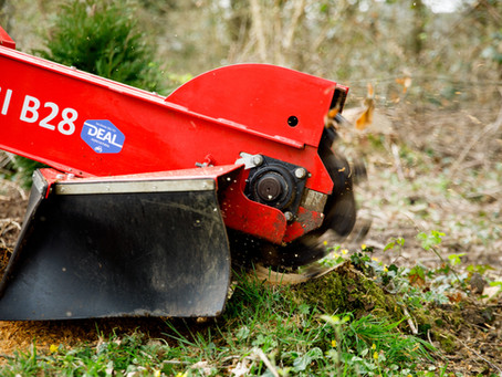 Removing Tree Stumps: All You Need to Know