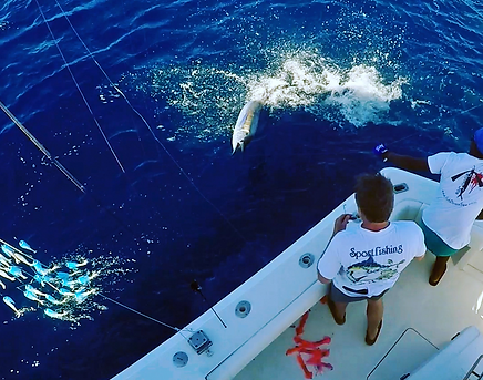 Sailfish with Fish Downsea 2.0 hanging