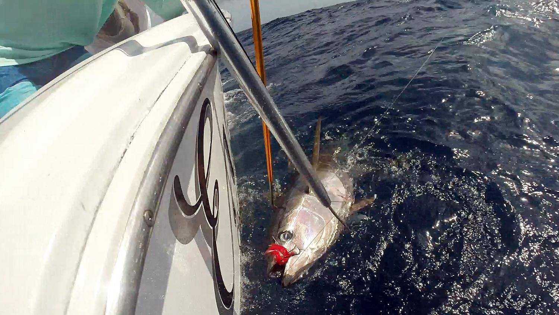 tuna boatside 2 red hat
