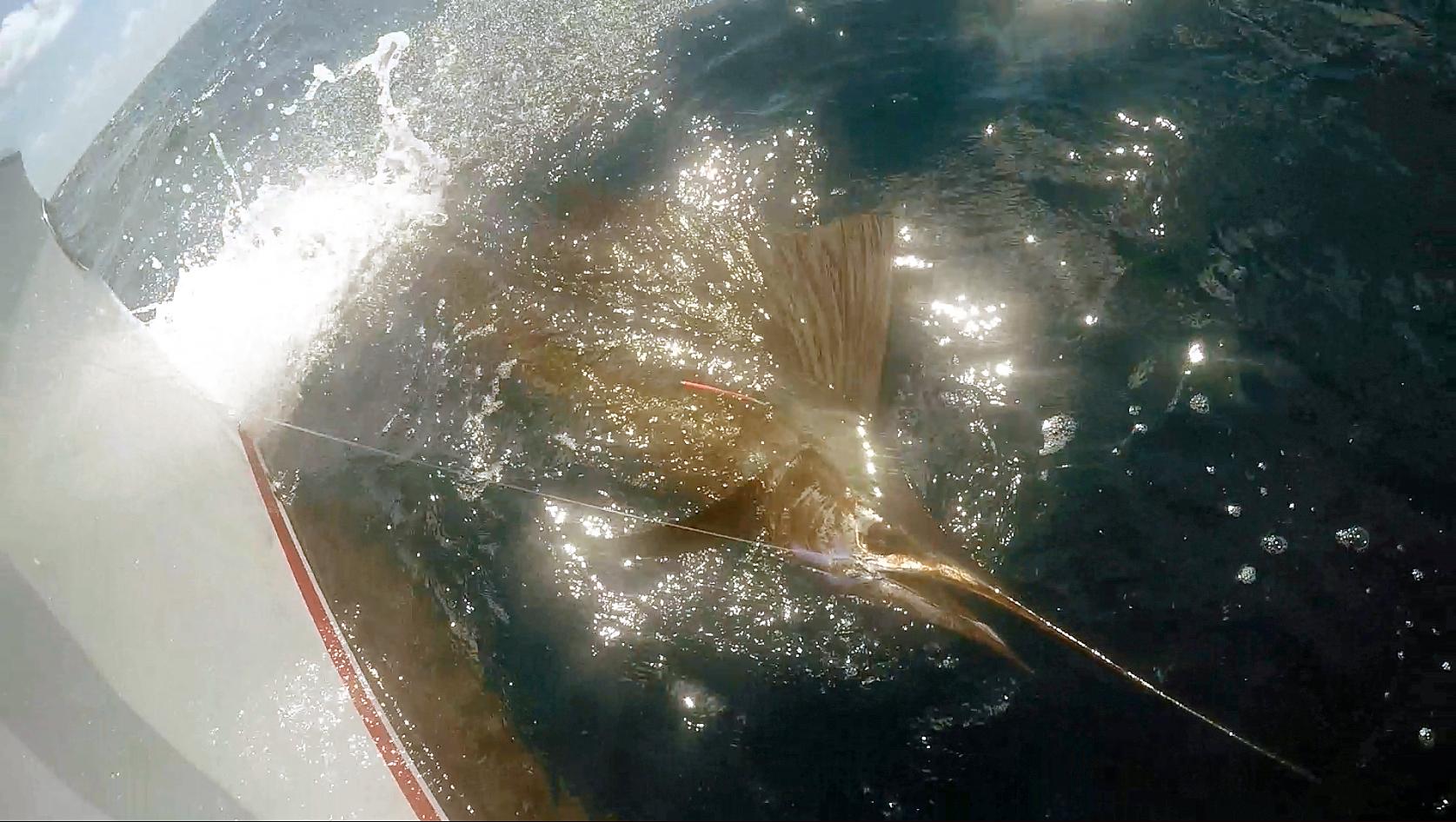 sailfish crystal P Hat