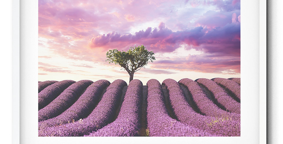 Lavender fields, Valensole