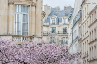 Spring in Paris-5740logo.jpg