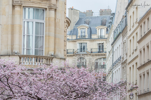 Spring in Paris-5740logo.jpg