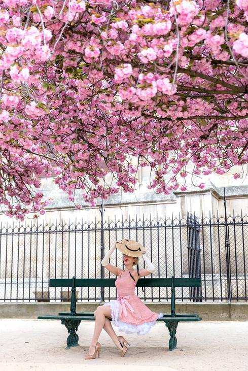 Cherry Blossom in Paris