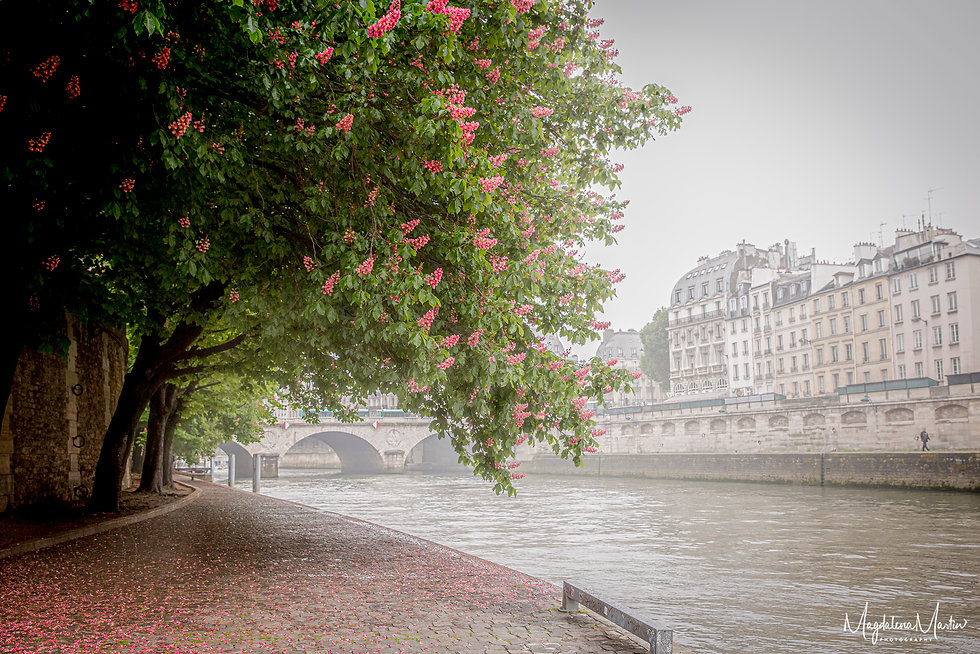 Chestnut trees Paris-7091.jpg