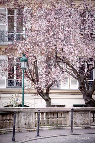 Spring in Paris-5159logo.jpg
