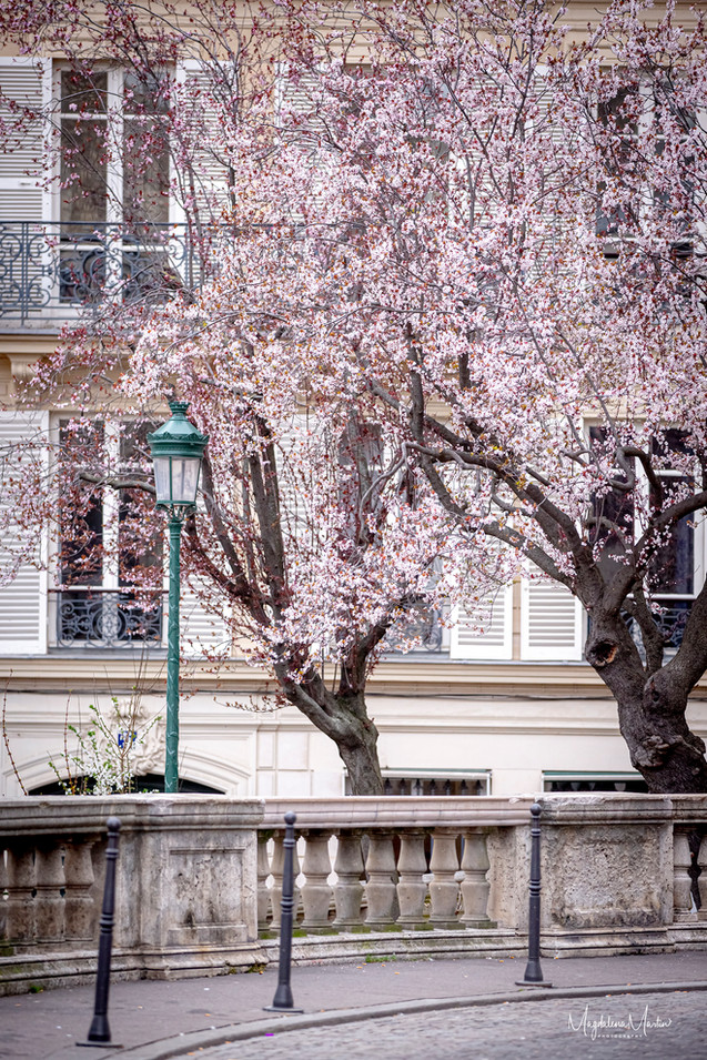 Spring in Paris-5159logo.jpg
