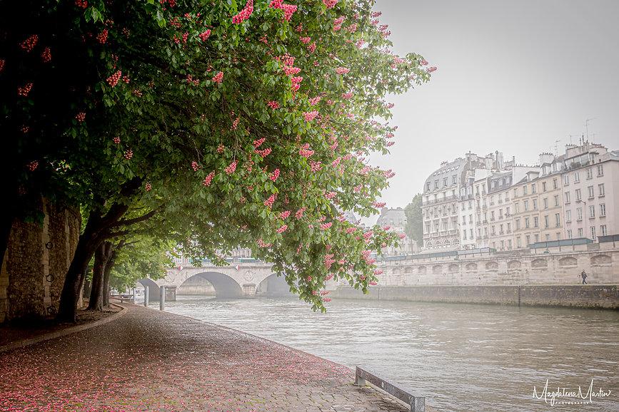 Chestnut trees Paris-7091.jpg