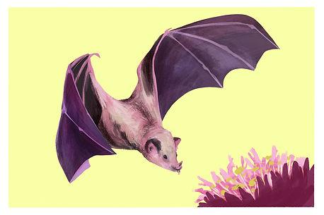 mexican long nosed bat postcard.jpg