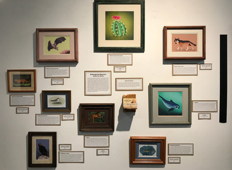 Endangered Species Gallery Show
