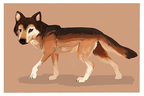 mexican grey wolf postcard.jpg
