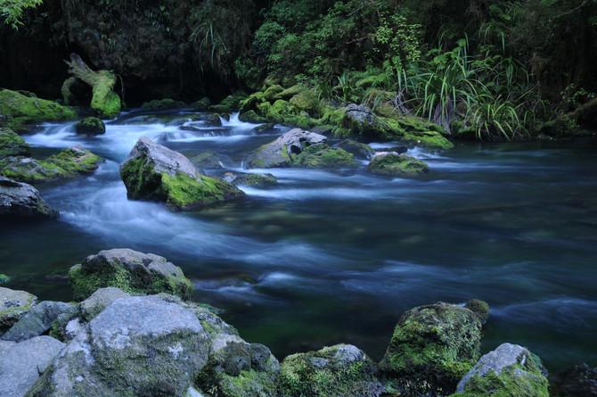 The Energy of Places.  Pearse Resurgence - Kahurangi Nat. Park