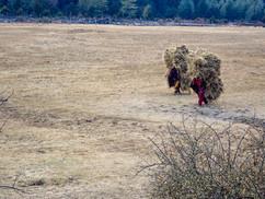 carrying hay - Dhorpatan -  Baglung District