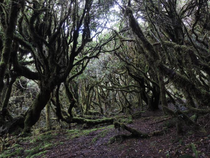 Te Araroa – Hamilton to Taumarunui