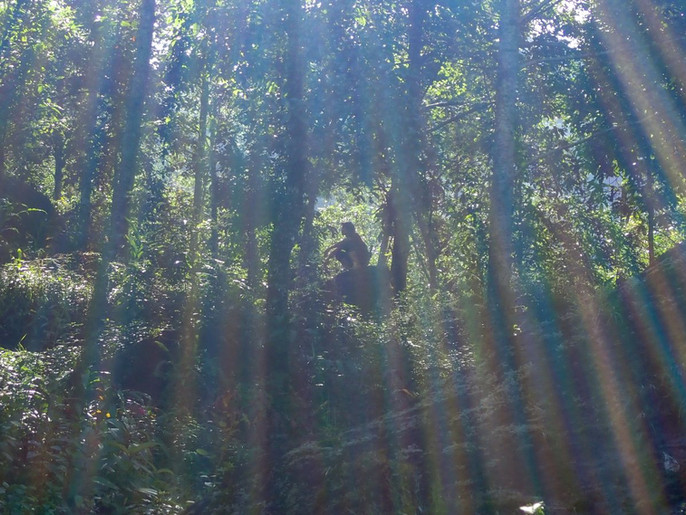In the jungle near Bahrabise - Sankhuwasabha District