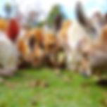 Caversham Wildlife Park (6).jpg